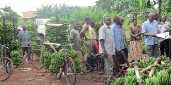 The 20,000 Shillings Project in Kibaale District